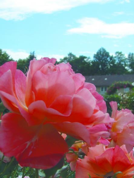 Magdalenengarten in voller Pracht